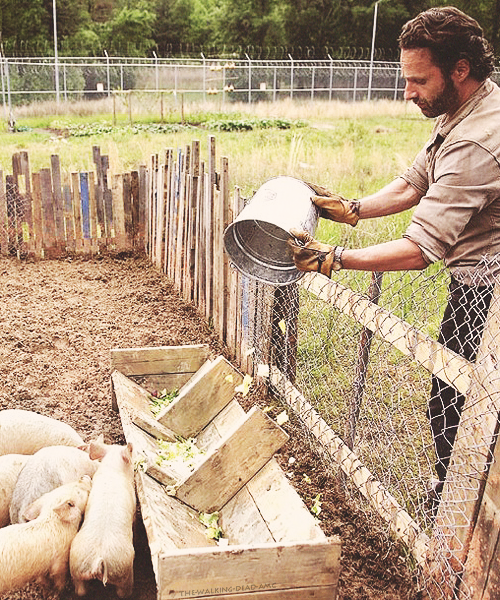 rick feeding pigs